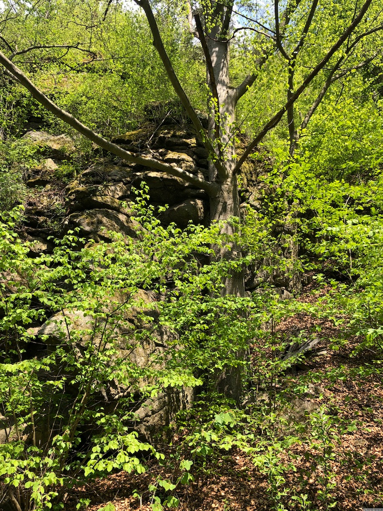 Granit hinter Baum