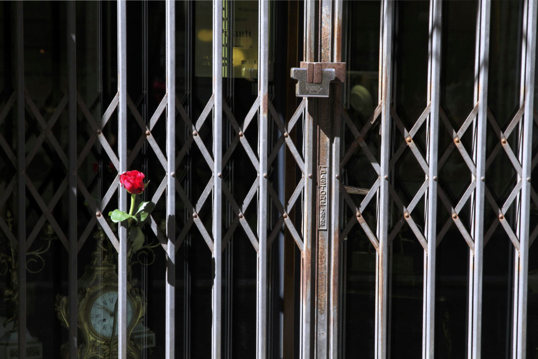 Rose im Gitter