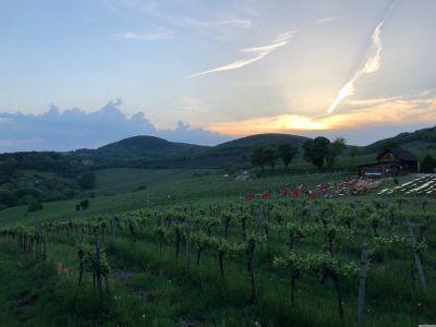 """Weingarten, dahinter der leere Gastgaarten des Heurigen """"Mayer am Nussberg"""" und der Sonnenuntergang über dem Wienerwald."""