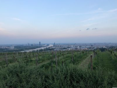 Das nördleche abendliche Wien vom Nussberg aus gesehen, mit der Donau.