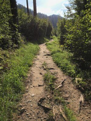 Wanderweg mit Wurzeln