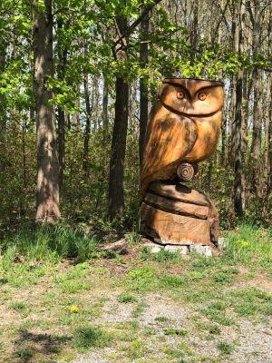 Eule im Wald