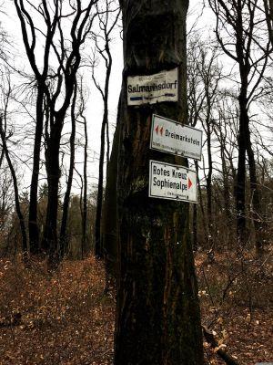 """Hinweisschild """"Salmannsdorf"""" verwachsen im Baum"""